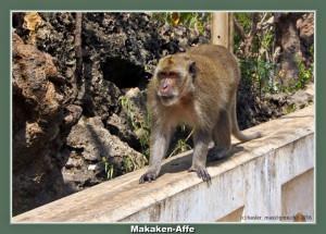 Phatchaburi Höhle Tempel Khao Luang: Makaken-Affe