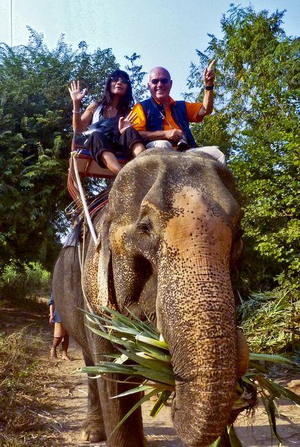 elephant-pat-max